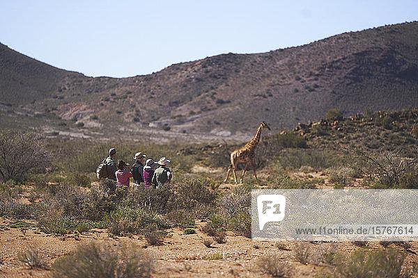 Safari-Gruppe beobachtet Giraffen im sonnigen Wildschutzgebiet in Südafrika