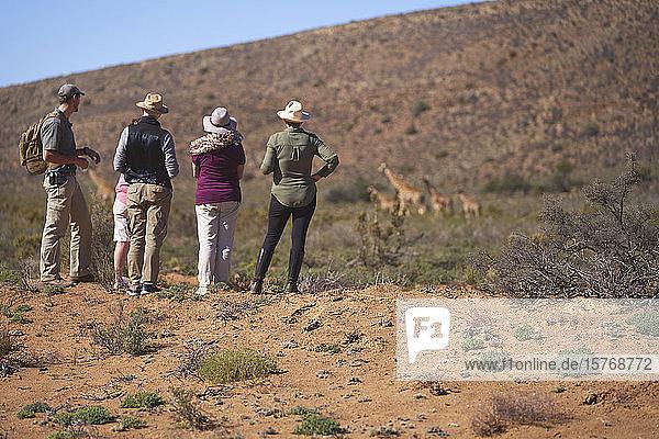 Safari-Gruppe beobachtet Giraffen in der Ferne Südafrika