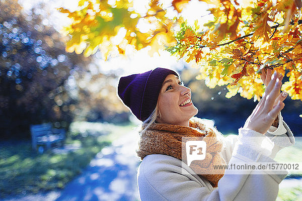 Smiling  curious young woman looking up at autumn leaves on tree in sunny park