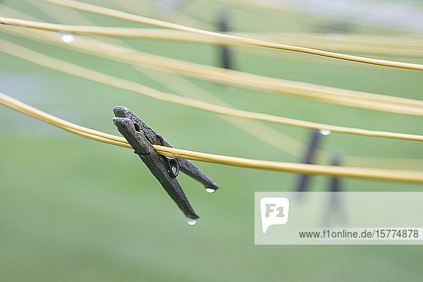 Wet clothes pins on clothes lines.