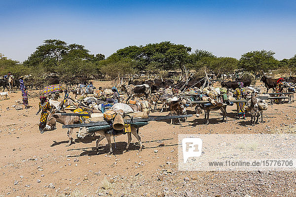 Caravan of Peul nomads with their animals in the Sahel of Niger  West Africa  Africa