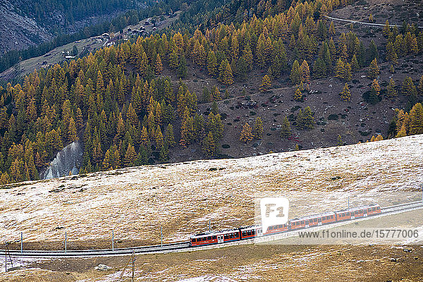 Gornergrat Bahn train runs among colorful woods in autumn  Zermatt  canton of Valais  Swiss Alps  Switzerland  Europe
