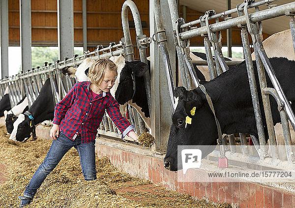 Mädchen auf einem Bauernhof  im Kuhstall