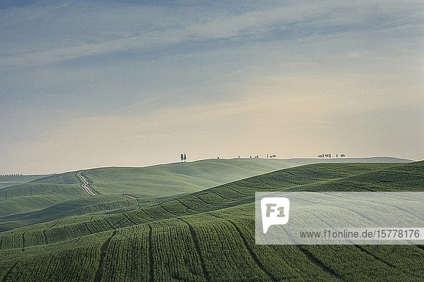 Trees on hill in Tuscany  Italy