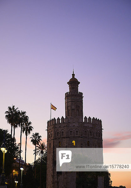 Torre del Oro by palm trees at sunset in Seville  Spain