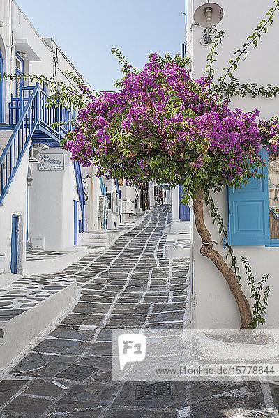 Purple flowers by building in Mykonos  Greece