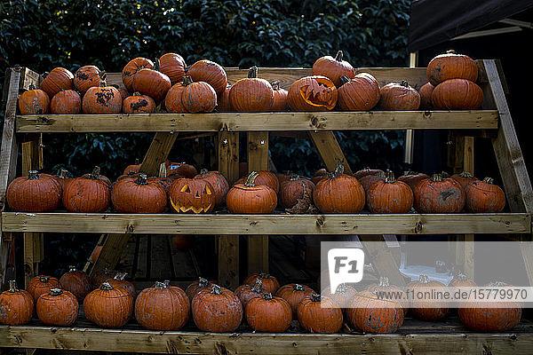 Racks of pumpkins and squash vegetables for sale at Halloween.