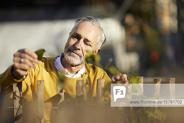 Portrait of mature man looking at plant