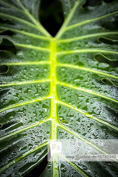 Spanien  Nahaufnahme eines mit Regentropfen bedeckten grünen Blattes