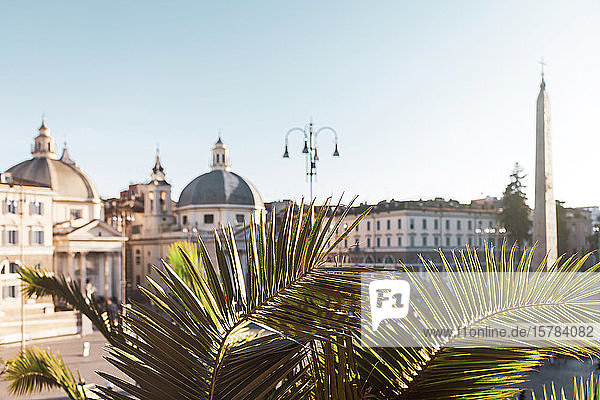 Italien  Rom  Palmenzweige gegen Gebäude der Piazza del Popolo