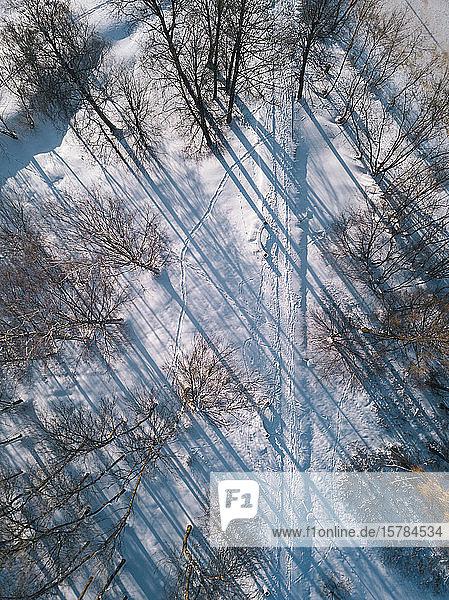 Russland  Oblast Leningrad  Tichwin  Luftaufnahme einer schneebedeckten Straße  die von kahlen Bäumen umgeben ist