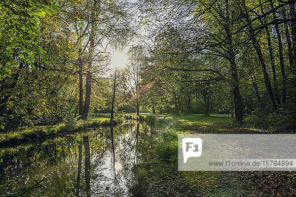 Die Isar im Nordenglischen Garten im Herbst  Oberfohring  München  Deutschland
