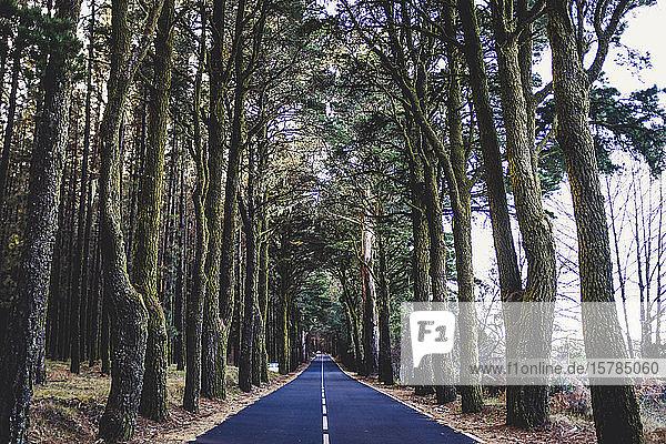 Spanien  Teneriffa  Baumgesäumte Landstraße