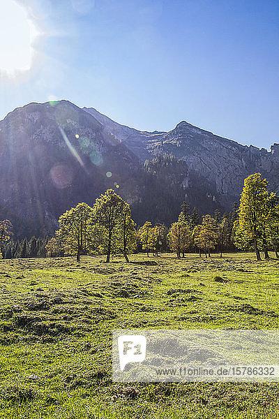 Großer Ahornboden im Karwendelgebirge im Herbst  Hinteriss  Österreich