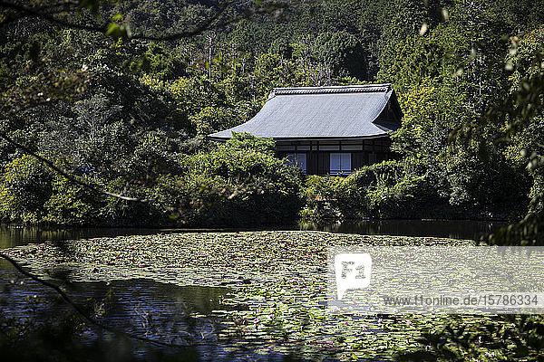 Japan  Präfektur Kyoto  Kyoto  Seerosen wachsen im Teich des buddhistischen Tempels