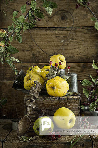 Quinces (Cydonia oblonga) with leaves and rose hips on rustic wooden crate
