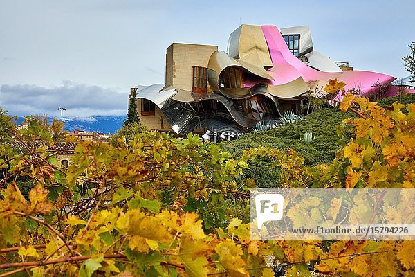 Vineyards in autumn  The City of Wine  Marques de Riscal winery  building by Frank O. Gehry  Elciego  Alava  Rioja Alavesa  Basque Country  Spain  Europe