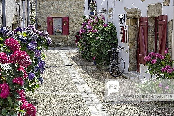 Hof mit Blumen  Hortensien  Piriac-sur-Mer  Département Loire-Atlantique  Frankreich  Europa
