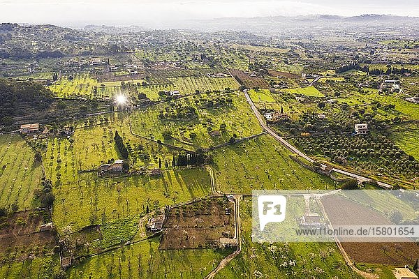Plantagen mit blühenden Mandelbäumen  Olivenbäumen und Obstbäumen  bei Selva  Region Raiguer  Luftbild  Mallorca  Balearen  Spanien  Europa