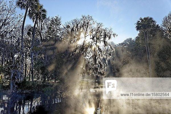 Flusslandschaft  Sonnenaufgang  Sonne durchbricht Baum mit Louisianamoos oder Spanisches Moos (Tillandsia usneoides)  Morgennebel  Symbolbild für geheimnisvoll  mystisch  Rainbow River  Rainbow Springs State Park  Dunnelon  Florida  USA  Nordamerika
