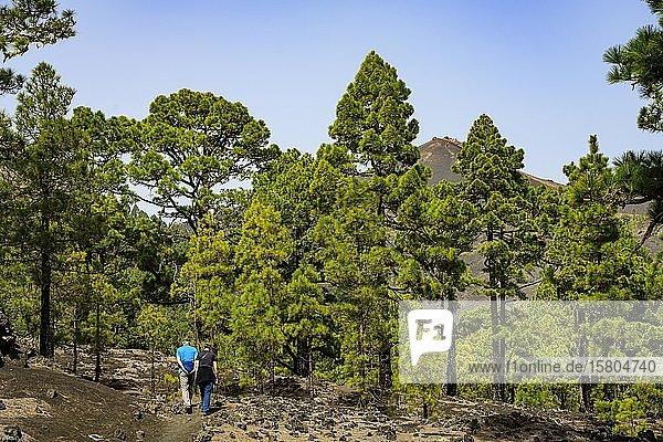 Wanderer am Weg zum Vulkan Martin auf La Palma  La Palma  Kanaren  Spanien  Europa