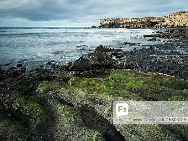 Mit grünen Algen bewachsene Steine bei Ebbe an einer Küstenlandschaft  La Pared  Fuerteventura  Kanaren  Spanien  Europa