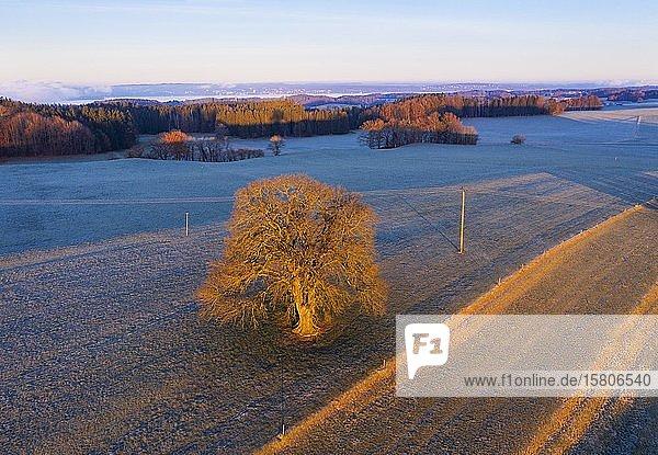 Kulturlandschaft bei Sonnenaufgang  nahe Eurasburg  Drohnenaufnahme  Oberbayern  Bayern  Deutschland  Europa