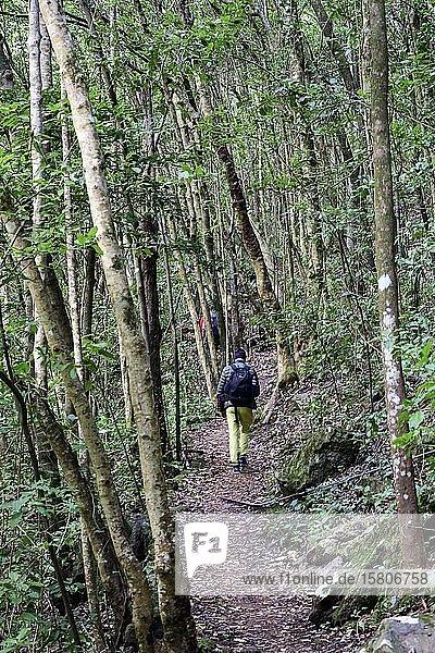 Wanderer gehen am Wanderweg durch einen Wald bei Tilos  La Palma  Kanaren  Spanien  Europa
