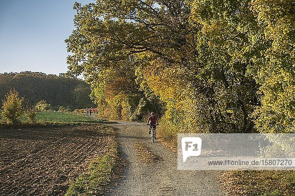 Radfahrerin auf Feldweg  Bad Vöslau  Niederösterreich  Österreich  Europa
