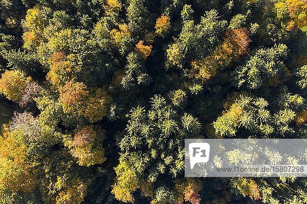 Herbstlicher Mischwald  Luftbild  Holzhausen  Oberbayern  Bayern  Deutschland  Europa