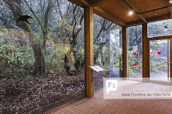 Besucherzentrum Laguna Grande im Lorbeerwald  Nationalpark Garajonay  La Gomera  Kanaren  Spanien  Europa
