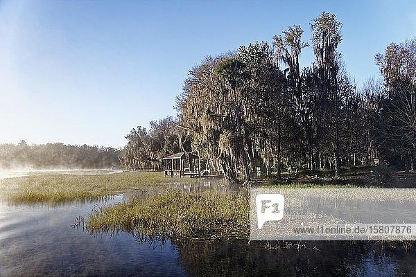 Flusslandschaft mit Schilf  Bootssteg  Bäume mit Louisianamoos oder Spanisches Moos (Tillandsia usneoides)  Rainbow River  Rainbow Springs State Park  Dunnelon  Florida  USA  Nordamerika