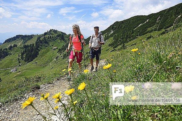 Wanderer beim Aufstieg zum Gipfel des Geigelstein  Sachrang  Chiemgau  Oberbayern  Bayern  Deutschland  Europa