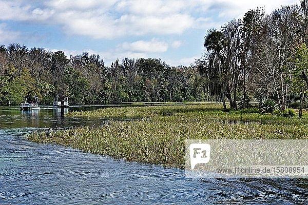 Flusslandschaft  Schilf  Bäume mit Louisianamoos oder Spanisches Moos (Tillandsia usneoides)  Rainbow River  Rainbow Springs State Park  Dunnelon  Florida  USA  Nordamerika