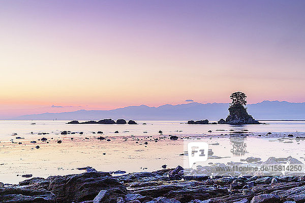 Pine tree on a rock outcrop in the Sea of Japan  Ameharakaigan  Toyama prefecture  Honshu  Japan  Asia