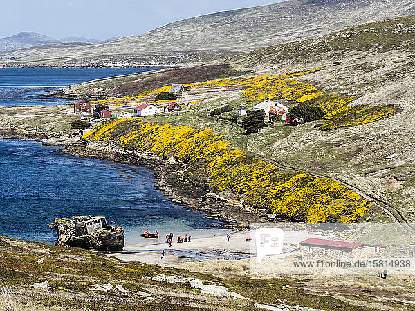 View of the Barnard Memorial Museum  front  and the Settlement in Coffin's Harbour  New Island  Falklands Islands  South America