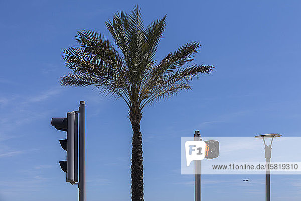 France  Alpes-Maritimes  Cagnes-sur-Mer  Palm tree between two stoplights