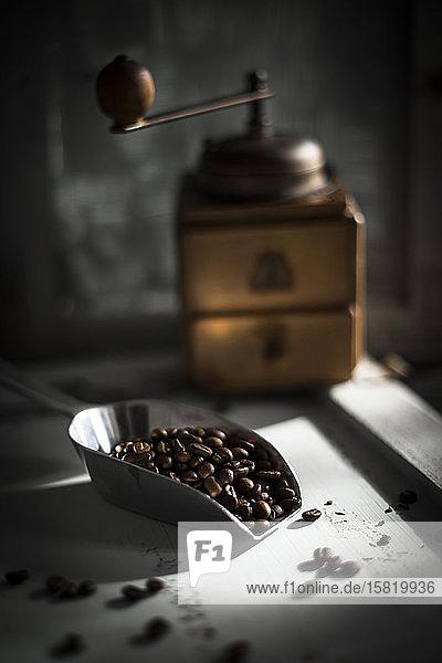 Schaufel gerösteter Kaffeebohnen mit Kaffeemühle im Hintergrund