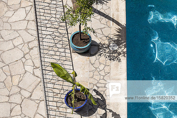 France  Alpes-Maritimes  Cagnes-sur-Mer  Potted plants standing at edge of outdoor swimming pool