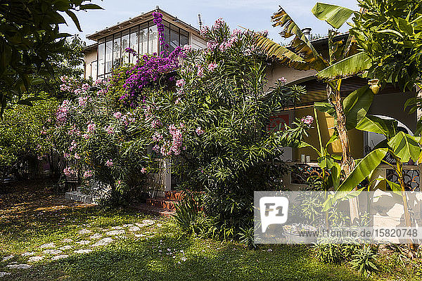 France  Alpes-Maritimes  Cagnes-sur-Mer  Flowers blooming in backyard