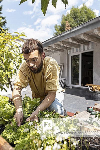 Junger Mann baut Gemüse auf seiner Dachterrasse an