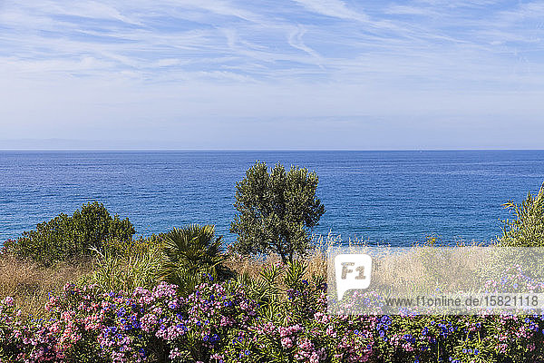 Italy  Province of Imperia  San Remo  Flowering bushes with clear line of horizon over Mediterranean Sea in background
