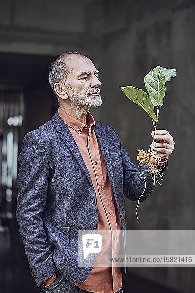 Leitender Geschäftsmann mit Pflanzensetzling