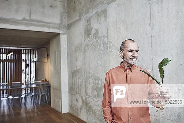 Kreativer Geschäftsmann mit Pflanzensetzling in seinem minimalistischen Büro