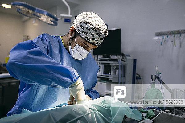 Tierarzt in einer Praxis