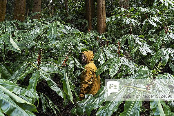 Mann steht im Wald  umgeben von riesigen Blättern  Sao-Miguel-Insel  Azoren  Portugal