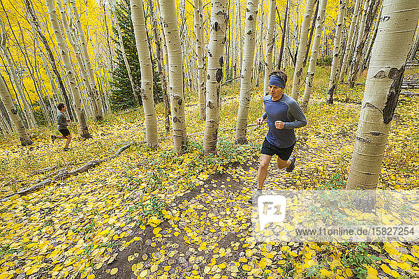 Männerpfad verläuft durch Espenwald mit Herbstfärbung in Vail  Colorado