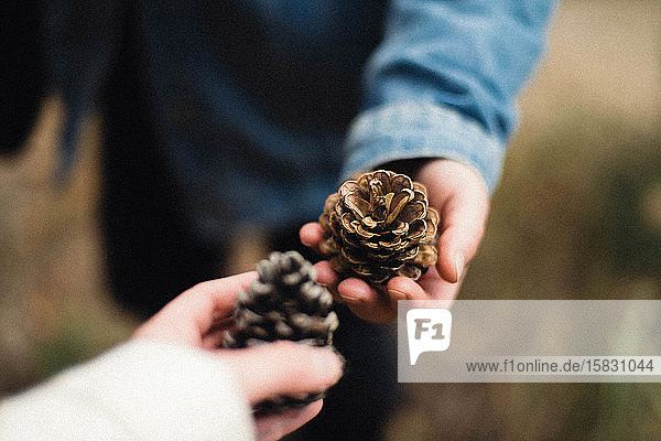 Cropped hand of woman holding pine cones in forest