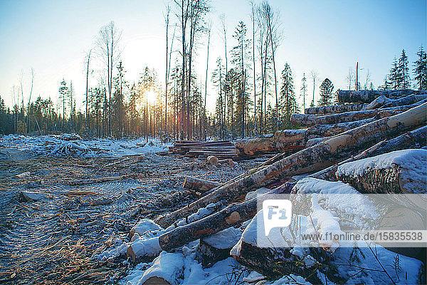 Waldproduktion. Ural-Winterwaldlandschaft.