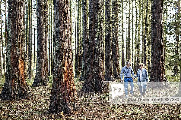 Älteres Paar genießt das Leben und hält sich beim Waldspaziergang an den Händen.